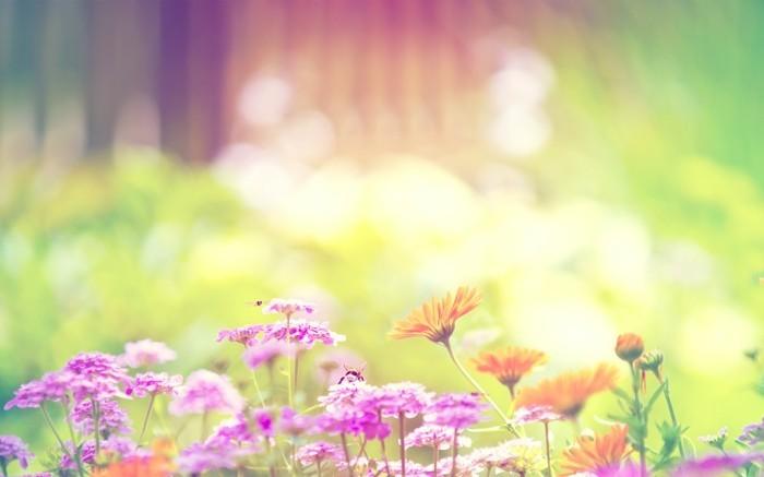 merveilleuse-image-soleil-levan-nature-belle-idée-de-photo-incroyable