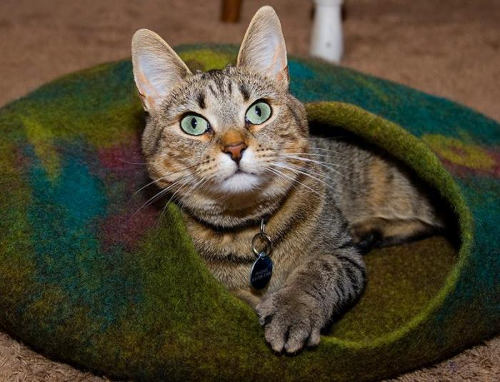 niche-pour-chat-grotte-pour-chat-originale