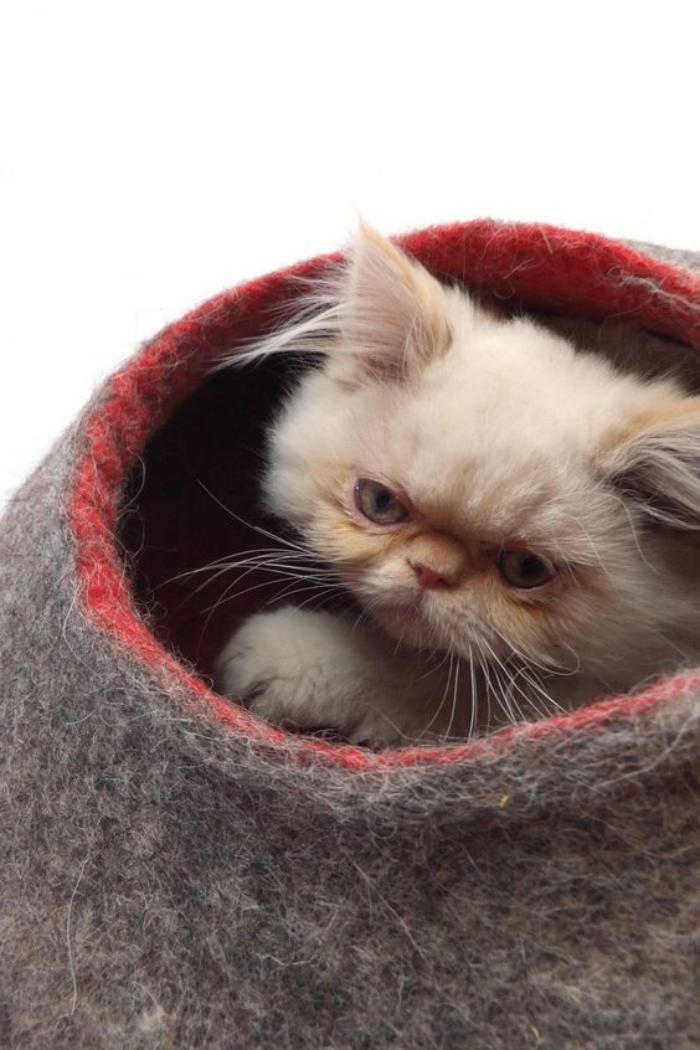 niche-pour-chat-et-chat-persan-blanc