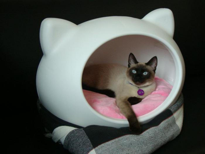 niche-pour-chat-maisonette-chat-amusante-plastique