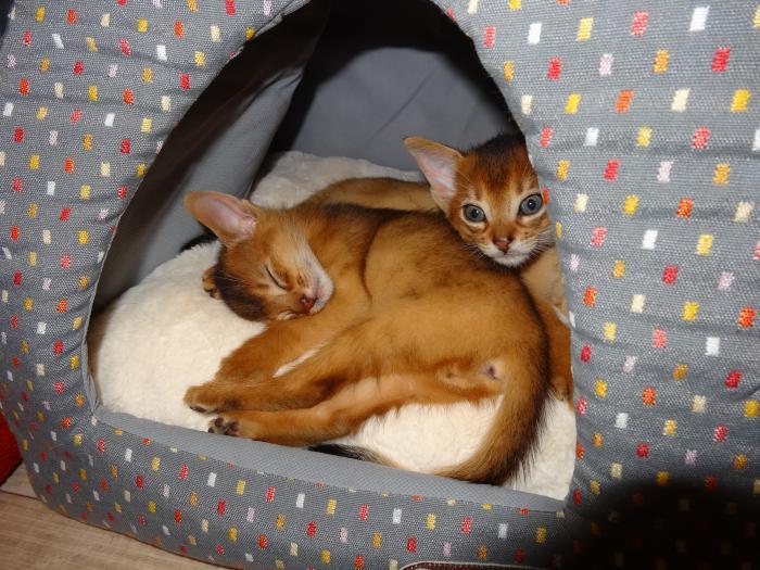 niche-pour-chat-maisonette-de-chat-textile-spacieuse