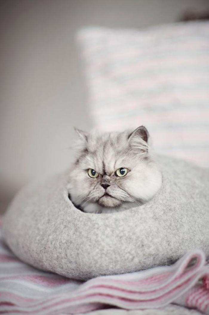 niche-pour-chat-un-chat-persan-dans-une-cachette-galet