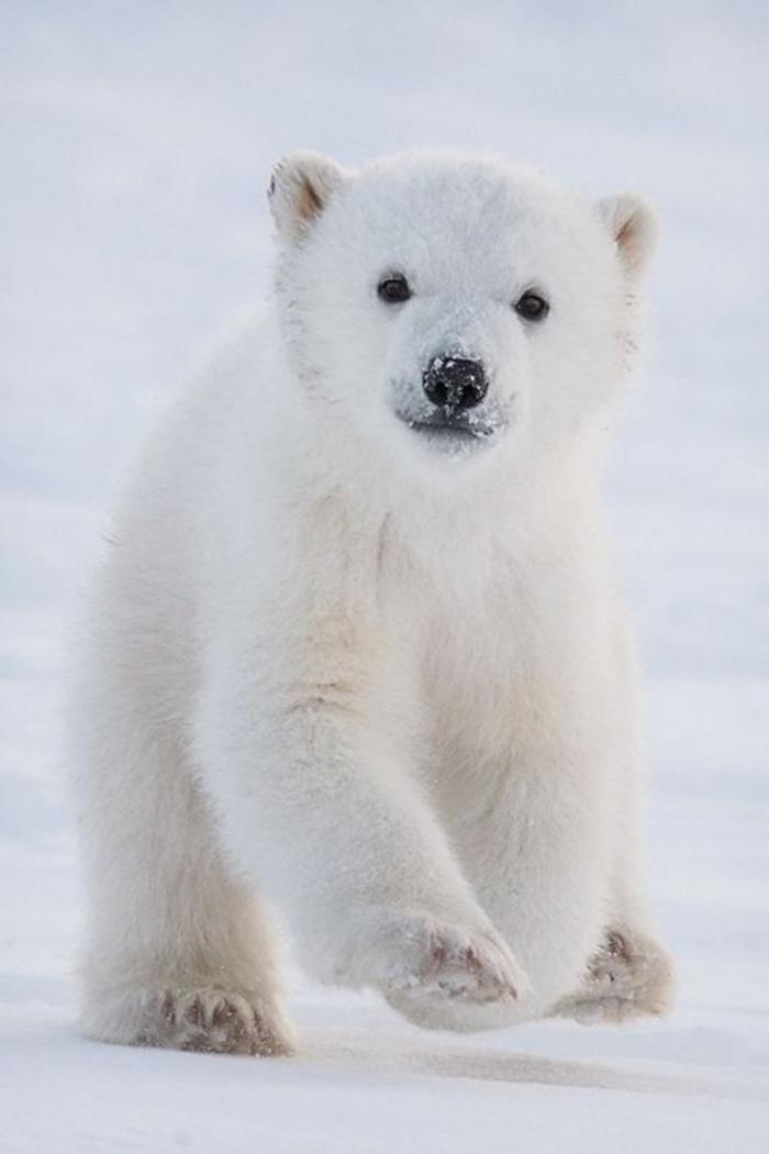 Bien connu L'ours polaire en 44 photographies uniques - Archzine.fr GT78