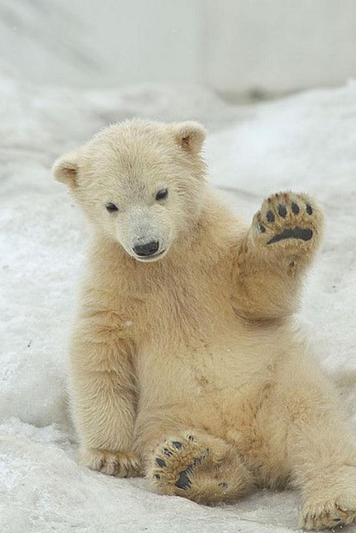 ours-polaire-ourson-qui-s'amuse-dans-la-neige