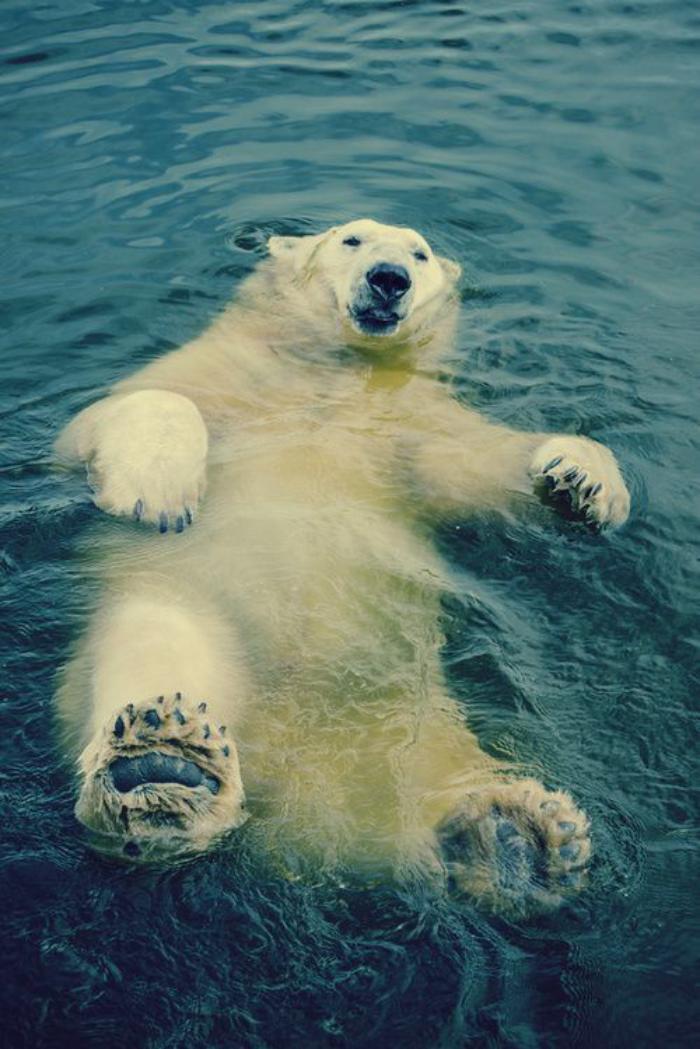 ours-polaire-un-ours-blanc-qui-s'amuse-dans-l'eau