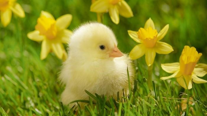 paysage-fleurs-la-plus-belle-photo-du-monde-beauté-poulet