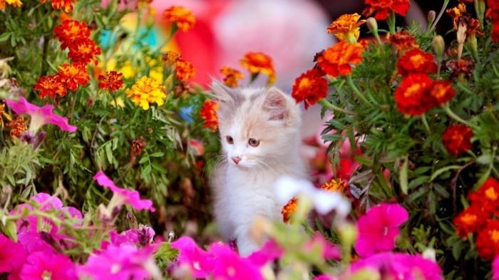 paysage-fleurs-la-plus-belle-photo-du-monde-beauté-un-chaton-mignon