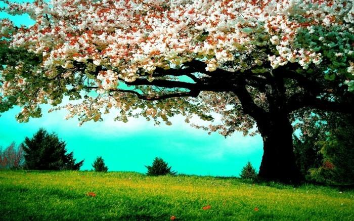 paysage-fleurs-la-plus-belle-photo-du-monde-beauté-v-printemps-cesieses
