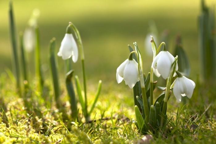 paysage-fleurs-la-plus-belle-photo-du-monde-beauté-vert