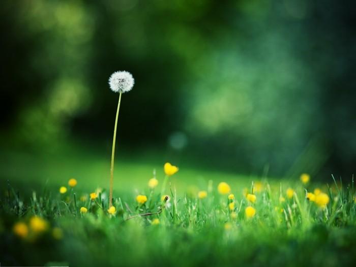 paysage-printemps-nature-et-decouverte-france-environnement-fête-de-la-nature