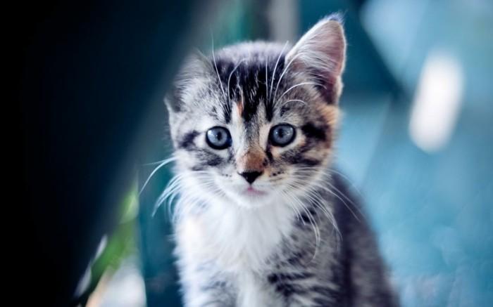 petit-chat-mignon-coloriage-chaton-coloriage-de-chat-bébé-chat