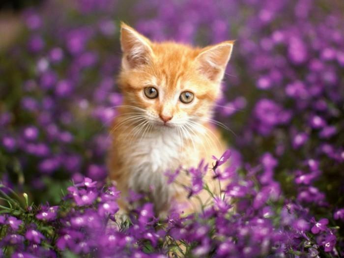 petit-chat-mignon-image-de-chat-trop-mignon-bébé-chat-coloriage-de-chat