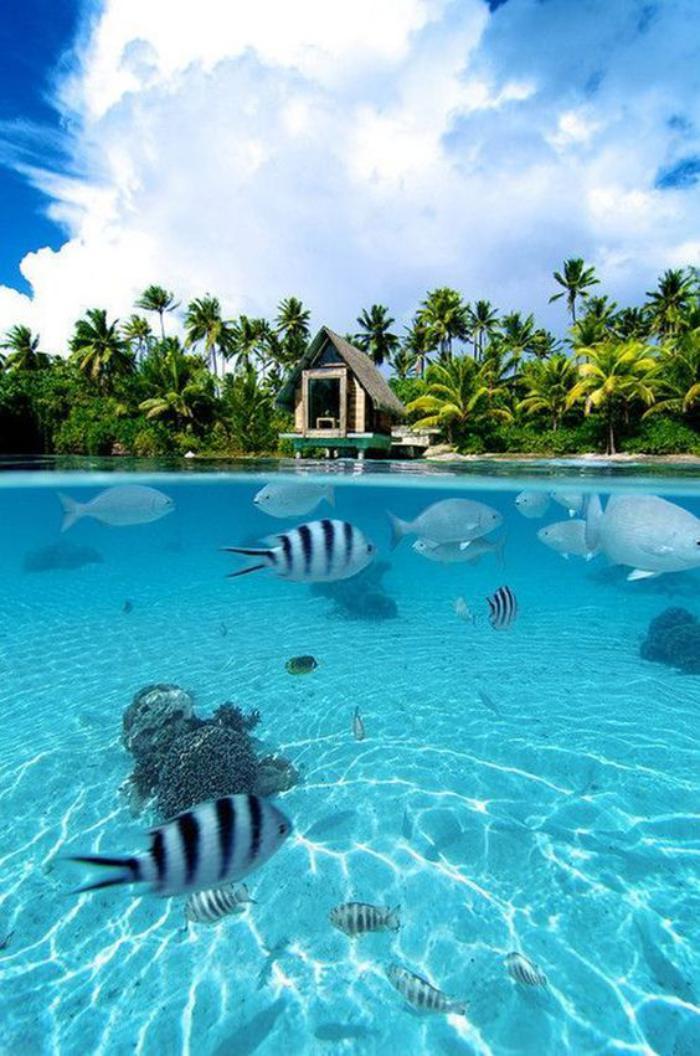 polynésie-française-voyage-la-vue-depuis-le-bungalow