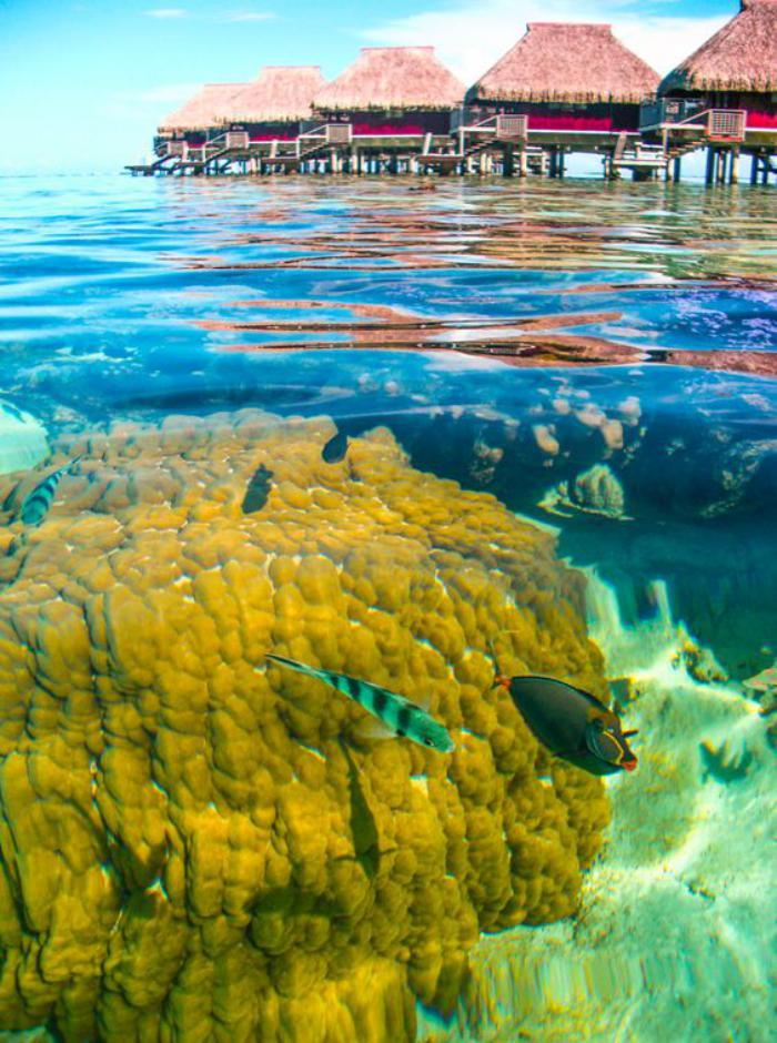 polynésie-française-voyage-les-récifs-coraliéns-de-Polynésie