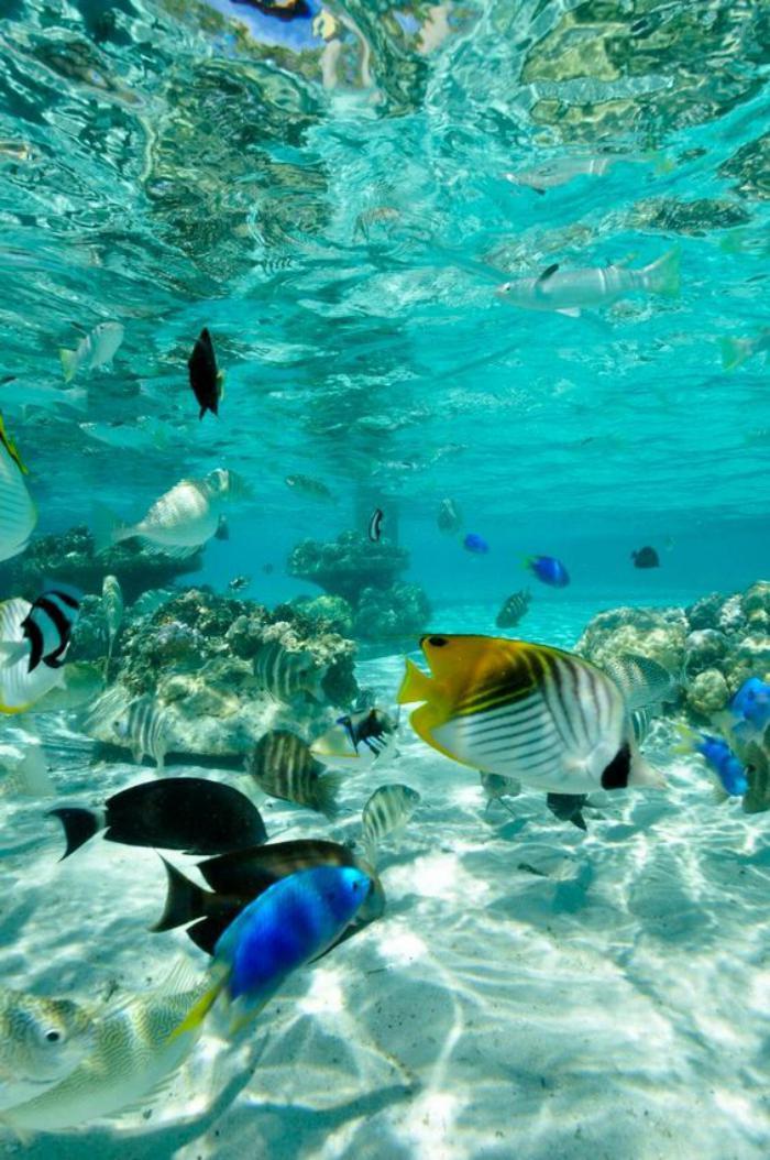 polynésie-française-voyage-plonger-avec-les-poissons-Polynésie