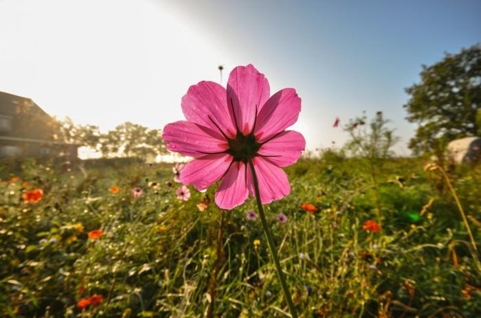 printemps-fleur-rose-formidable-photographie-artistique-images-trop-belles