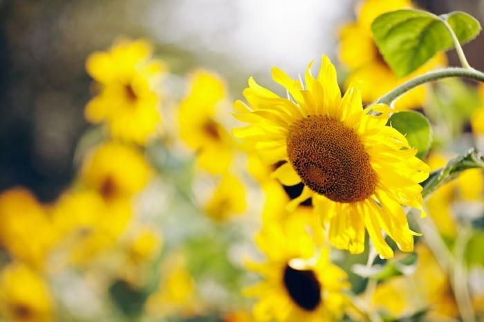 printemps-nature-et-decouverte-france-environnement-fête-de-la-nature-voir-jaune-fleurs