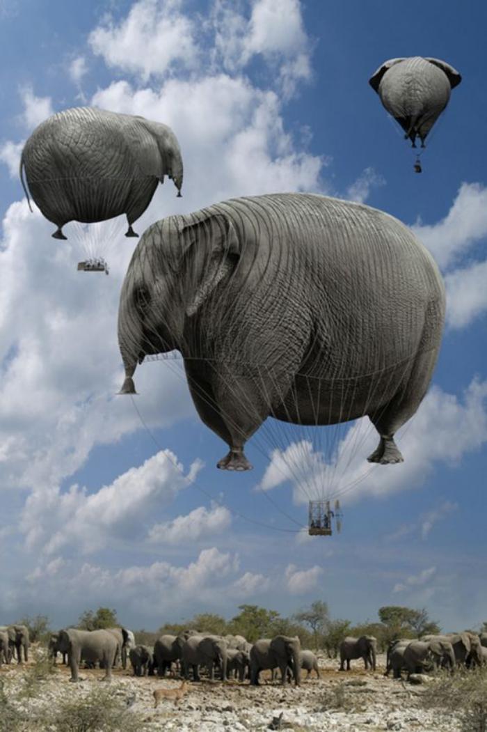 vol-en-montgolfière-ballons-éléphants-une-vue-spectaculaire