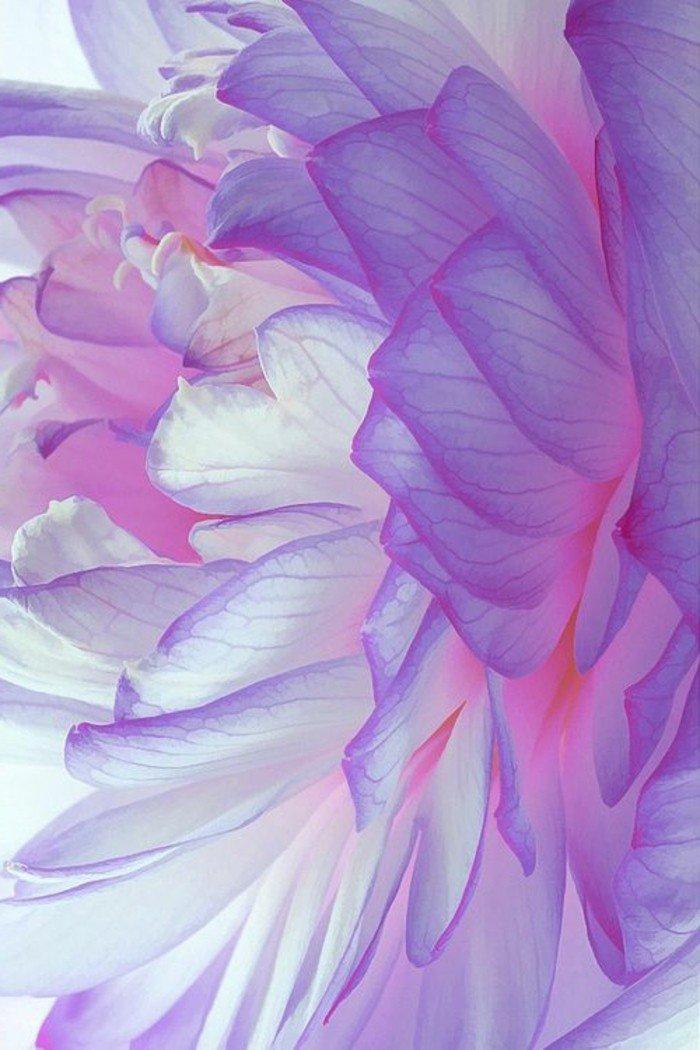 admirable-photo-de-la-nature-professionnel-image-fleurie-paysag-trop-cool