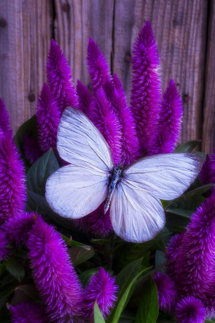 Les Plus Belles Fleurs Violettes En Beaucoup D 39 Images Charmantes