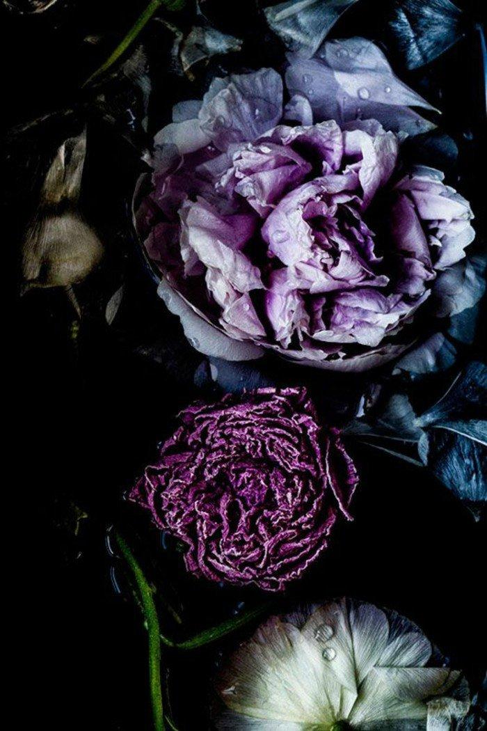 admirable-photo-de-la-nature-professionnel-image-fleurie-paysage-photographie-artistique