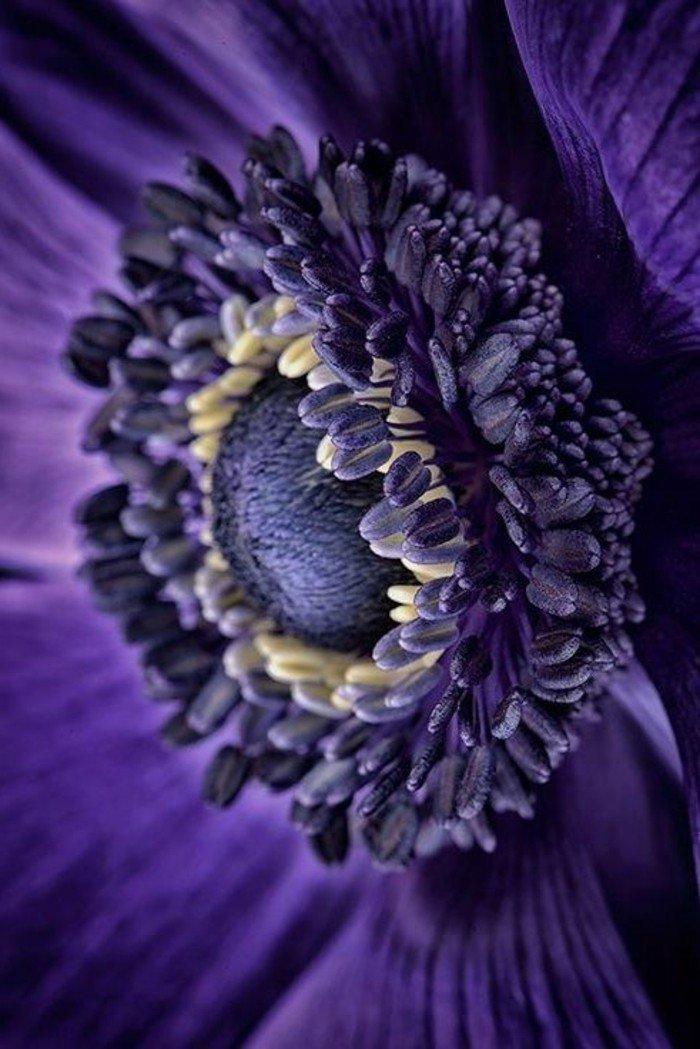 arbuste-fleurs-violettes-fleur-de-violette-fleur-violette-sauvage-beauté-fleurie