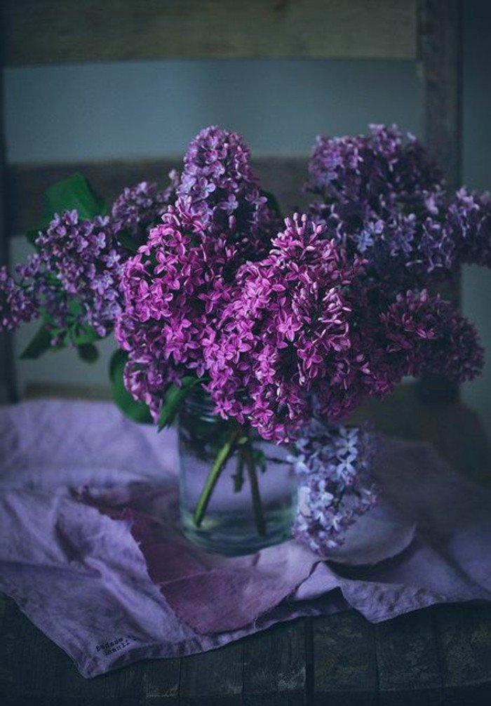 arbuste-fleurs-violettes-fleur-de-violette-fleur-violette-sauvage-beauté-une-vase-de-verre-bocal-printemps-fleurs