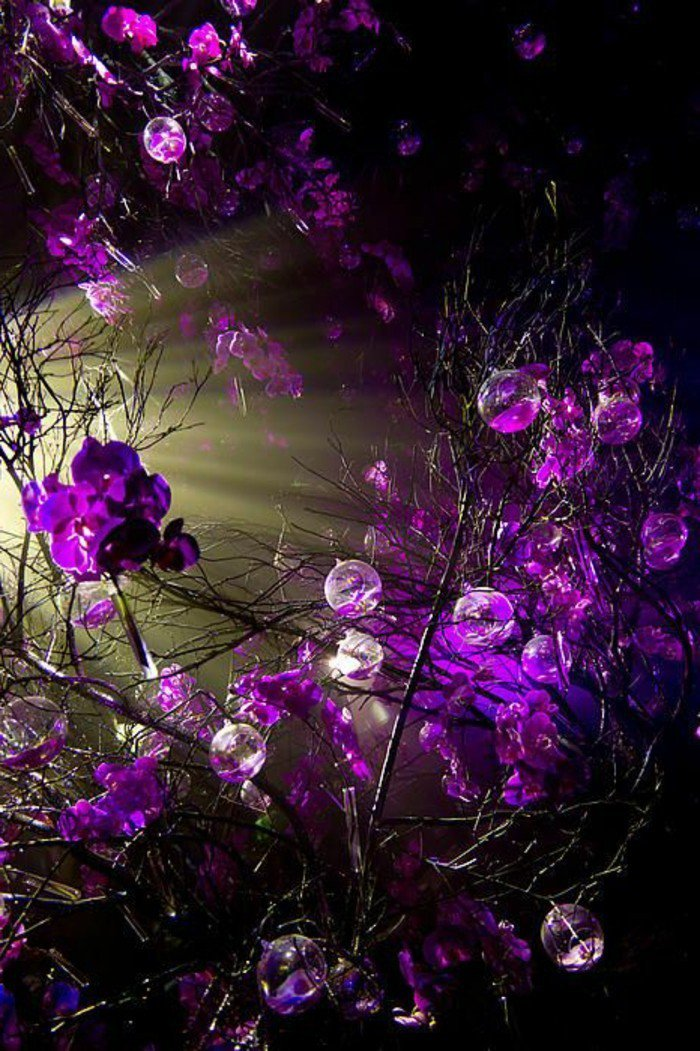 belle-fleur-blanche-et-fleur-violette-bicoleur-cool-idée-fleurs-à-offri-foret