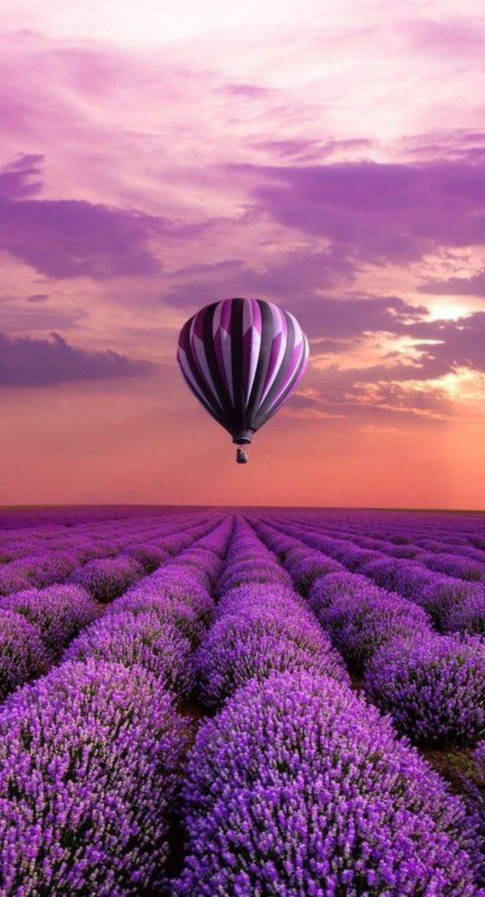 belle-fleur-blanche-et-fleur-violette-bicoleur-cool-idée-fleurs-à-offrir-balon-dans-le-ciel-coucher-de-soleil