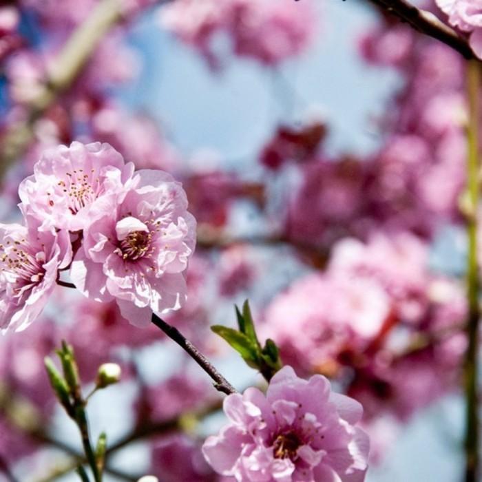 chouette-photo-fond-ecran-printemps-paysage-à-voir-les-fleurs-et-arbres-inspiration