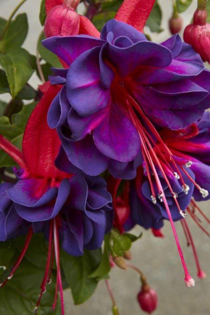 chouette-violettes-jolie-image-à-telecharger-fleur-beauté-en-plain-nature-cool