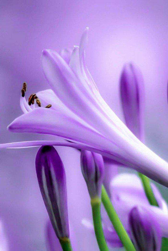 chouette-violettes-jolie-image-à-telecharger-fleur-beauté-en-plain-nature-photographie