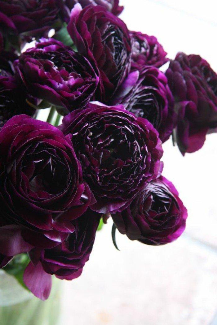 chouette-violettes-jolie-image-à-telecharger-fleur-beauté-en-plain-nature-violet-foncé