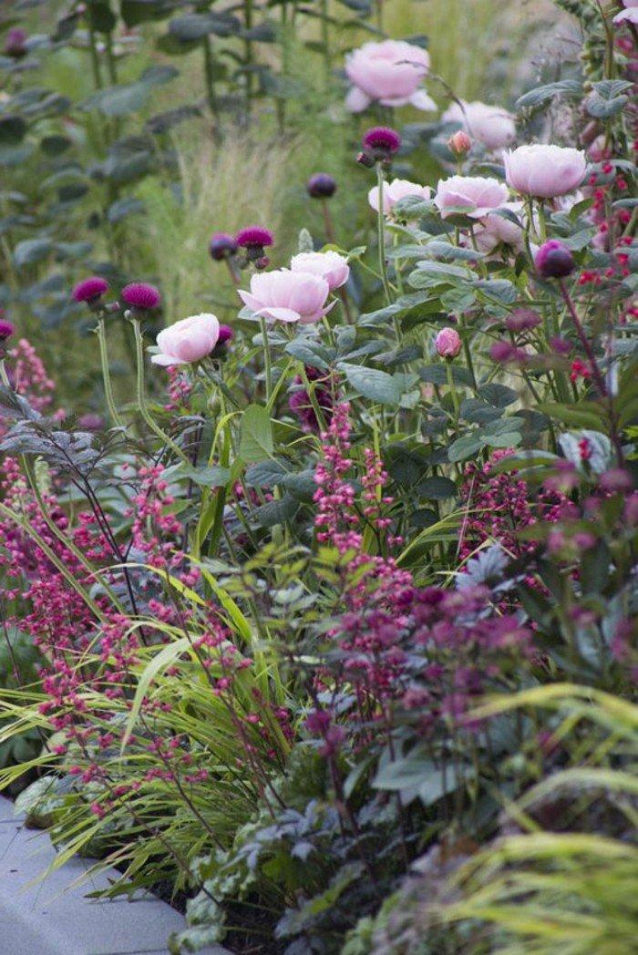 chouette-violettes-jolie-image-à-telecharger-fleur-beauté-en-plain-nature