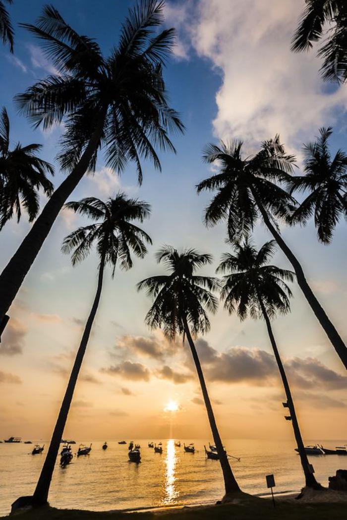 circuit-en-thailande-palmiers-sur-une-plage-de-thailande