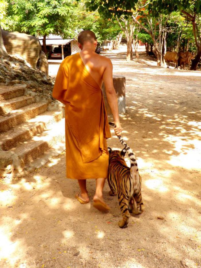 circuit-en-thailande-le-temple-des-tigres