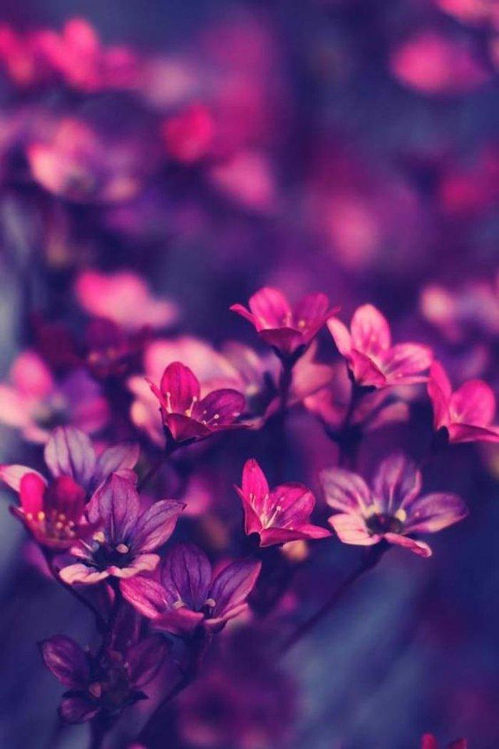 fantatiques-fleurs-en-violet-couleur-de-la-noblese