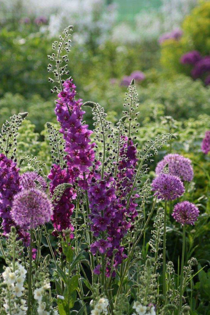 fleurs-blanches-pensée-fleur-flore-alpes-bouquet-de-la-nature-belle-belle-nature