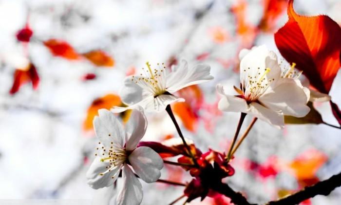 fleurs-fond-d'écran-fonds-d'écran-printemps-fond-d'écran-gratuit-printemps-