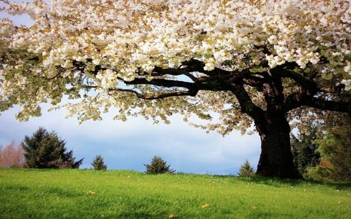 fond-d'écran-ete-fonds-d'écran-printemps-fond-d'écran-gratuit-printemps-