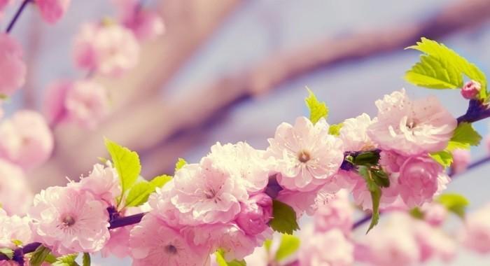 fond-d'écran-fleur-fonds-d'écran-printemps-fond-d'écran-gratuit-printemps-