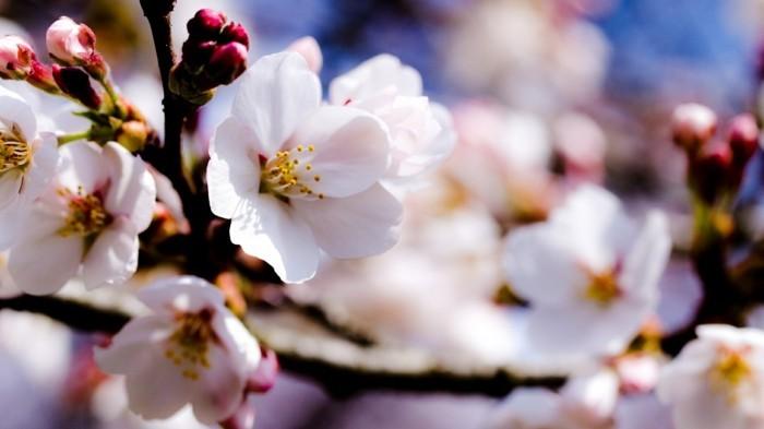 fond-d'écran-fleur-fonds-d'écran-printemps-fond-d'écran-gratuit-printemps