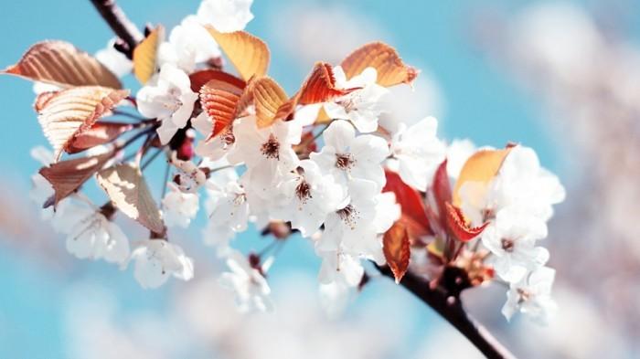 fond-ecran-ete-fonds-d'écran-printemps-fond-d'écran-gratuit-printemps-