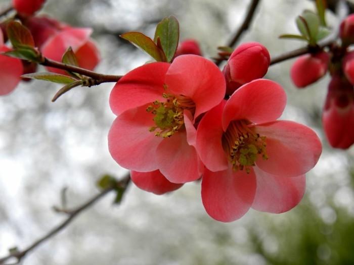 Fonds d 39 cran printemps qui vont inspirer votre journ e - Catalogue de fleurs gratuit ...