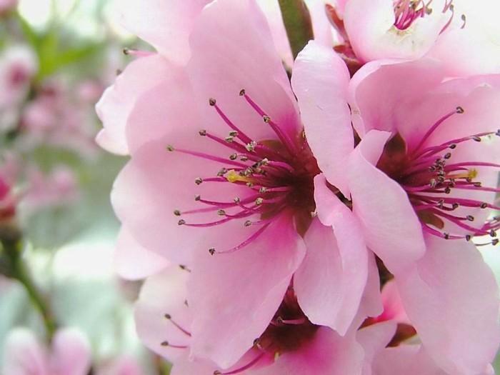 fond-ecran-printemps-fonds-d'écran-printemps-fond-d'écran-gratuit-printemps