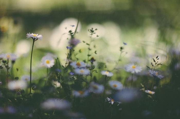fond-ecran-printemps-paysage-à-voir-les-fleurs-et-arbres-inspiration-fleurs-blanches
