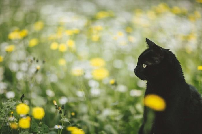 fond-ecran-printemps-paysage-à-voir-les-fleurs-et-arbres-inspiration-le-chaton-noire