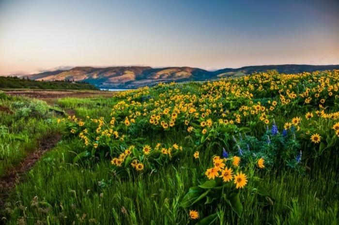 fond-ecran-printemps-paysage-à-voir-les-fleurs-et-arbres-inspiration-paysage-fleurie