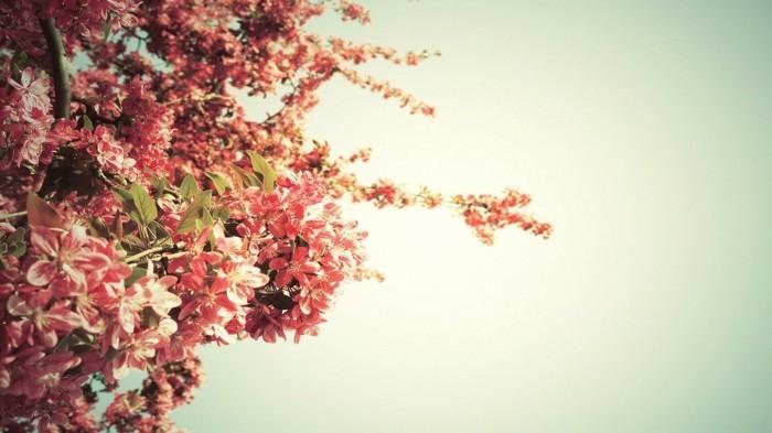 fonds-d'écran-fleurs-fonds-d'écran-printemps-fond-d'écran-gratuit-printemps-