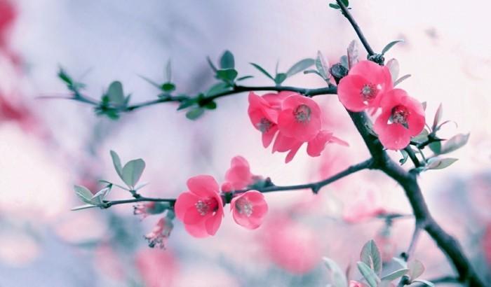 fonds-d'écran-printemps-fond-d'écran-gratuit-printemps-fleurs-fond-d'écran